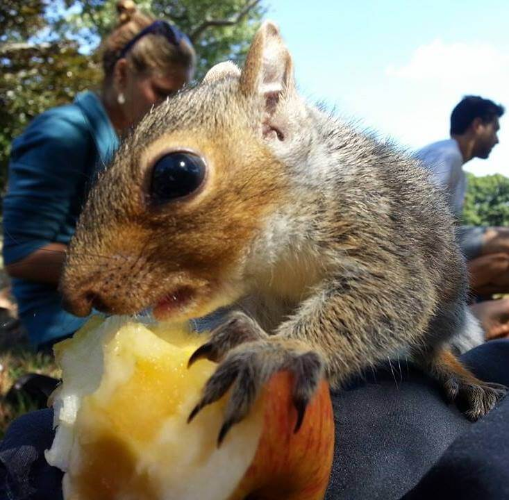 Tom's adopted squirrel, Fran
