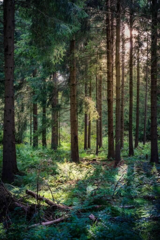 Tree restoration potential, Q&A