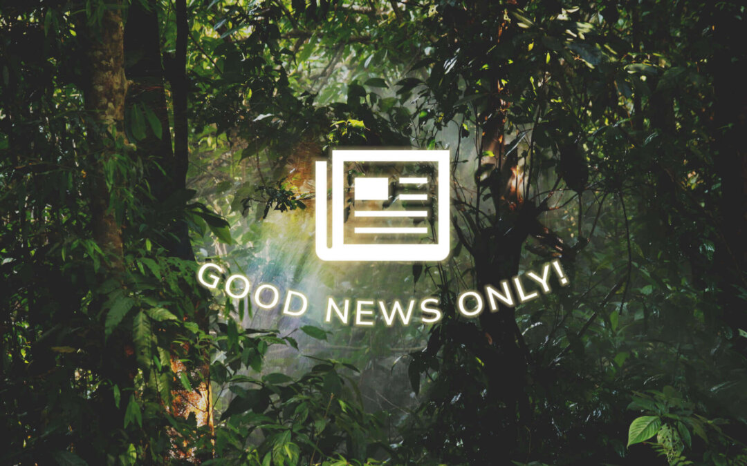 Good News in a Bad Year