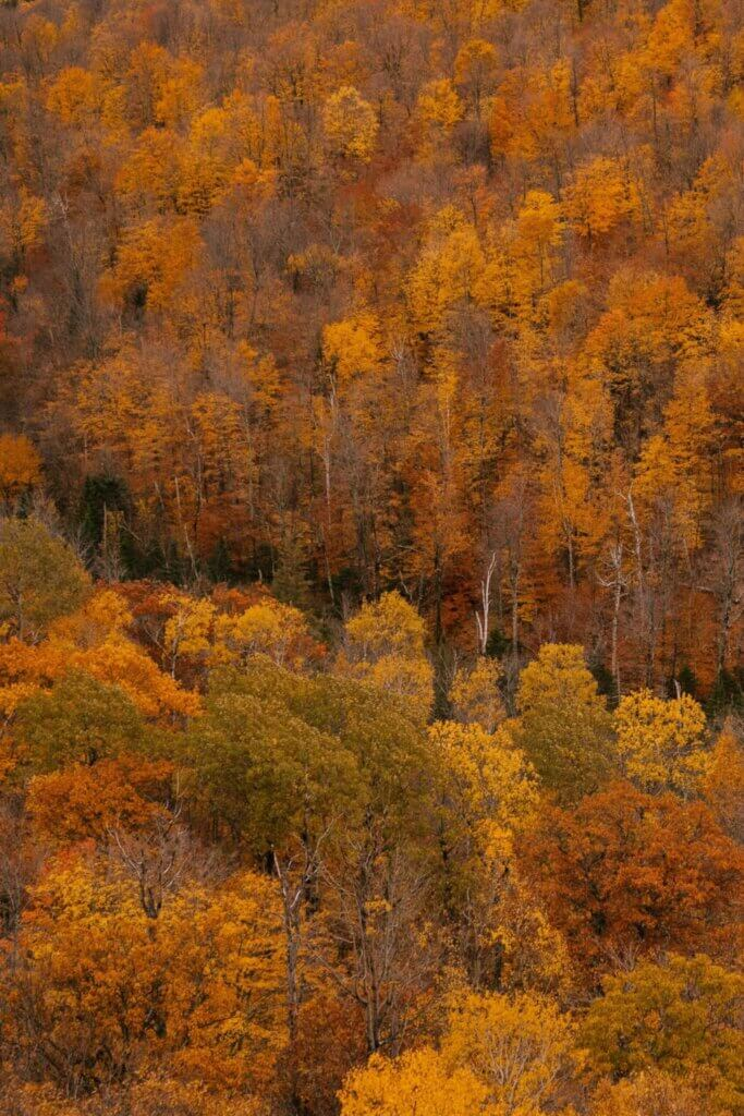 Increased growing-season productivity drives earlier autumn leaf senescence in temperate trees