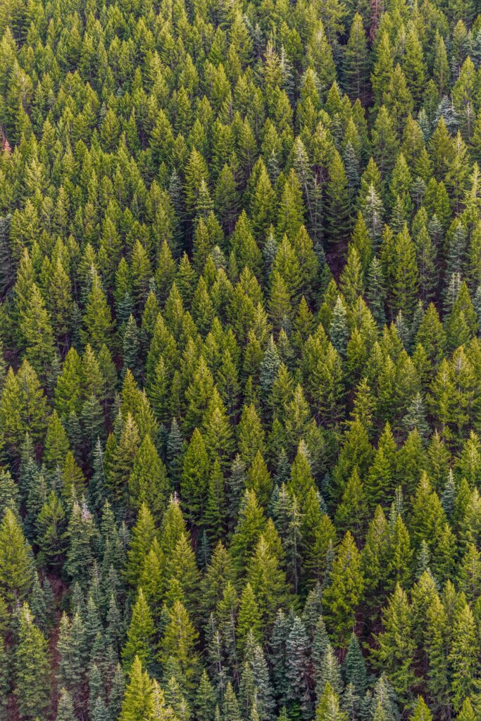 What's the Potential of a Trillion Trees?