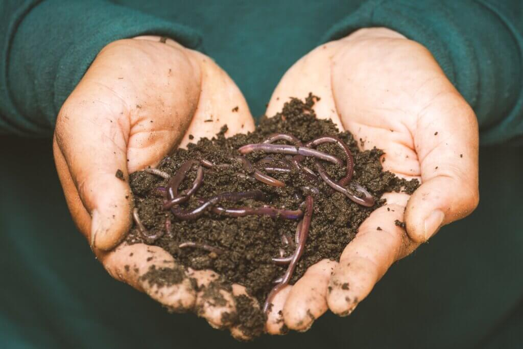 The diet of worms: Soil dwellers emerge as climate change heroes in study