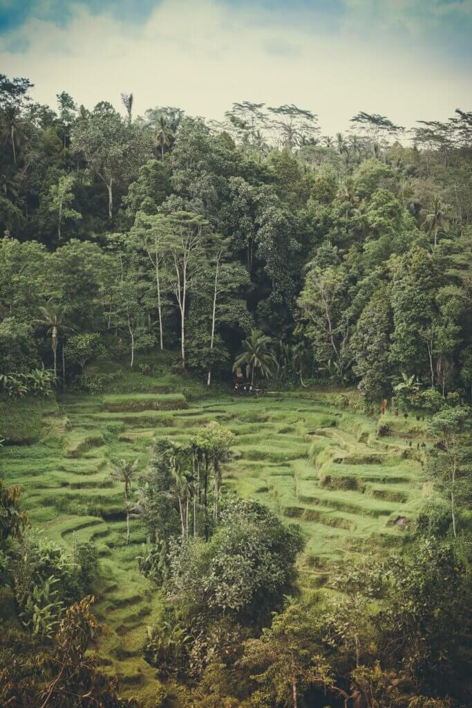 How trees and forests reduce risks from climate change