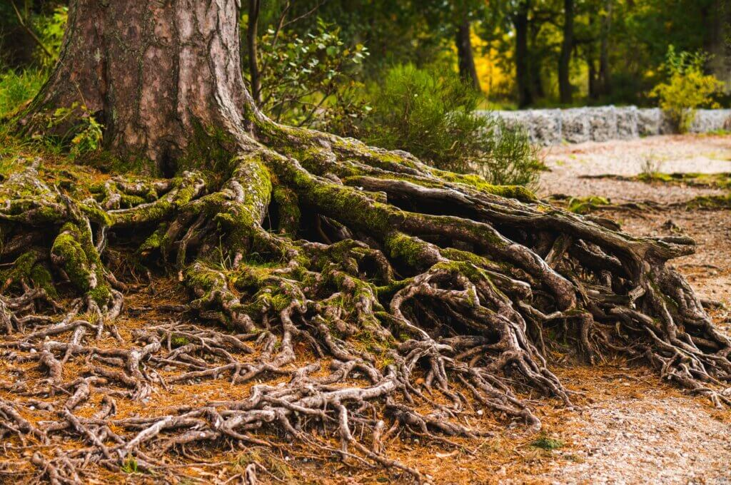 Roots represent a quarter of Earth's vegetation on average
