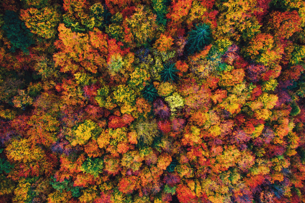 Why do autumn leaves change color?